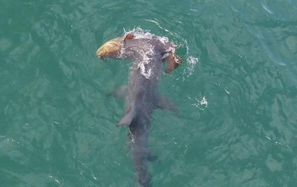 Смертельний напад акули на рибу зняли на відео