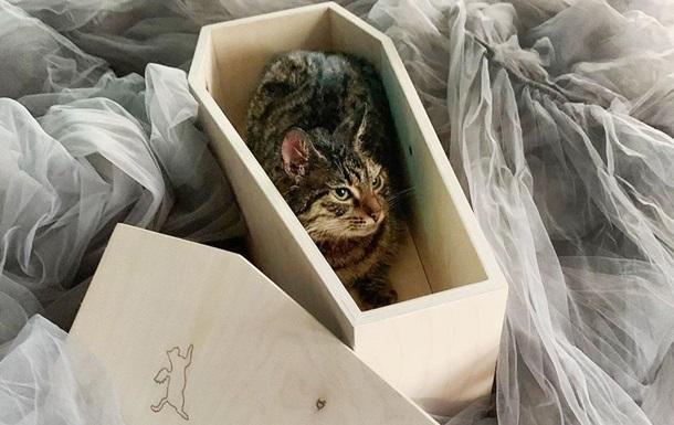 Магазин с гробами для котов открылся в Москве: фото