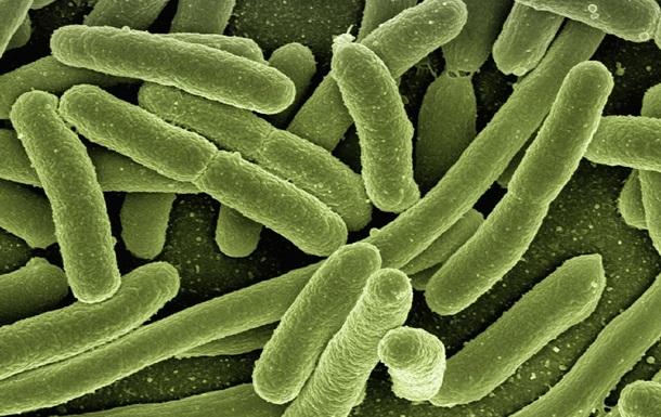 Розкрито секрет виникнення складних організмів