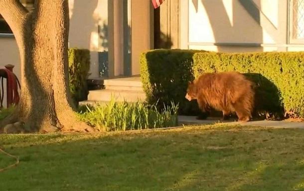 На улицах Калифорнии гулял медведь: фото, видео