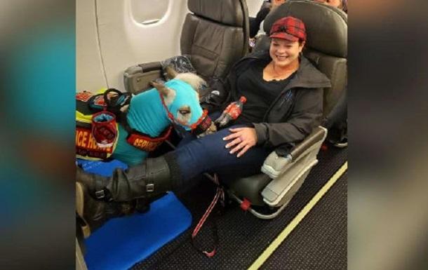 В США служебный пони летел на самолете: фото, видео
