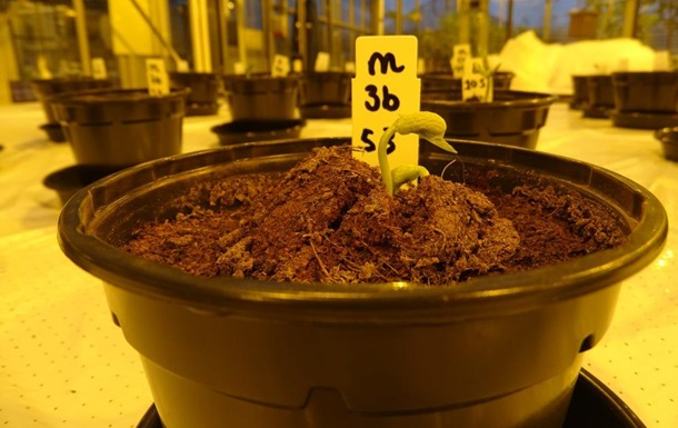 Моча астронавтов станет удобрением для растений на Марсе