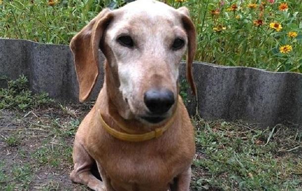 Самая старая собака в Украине умерла: фото
