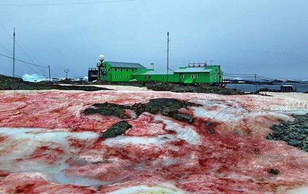 В Антарктиде снег стал малиновым: фото