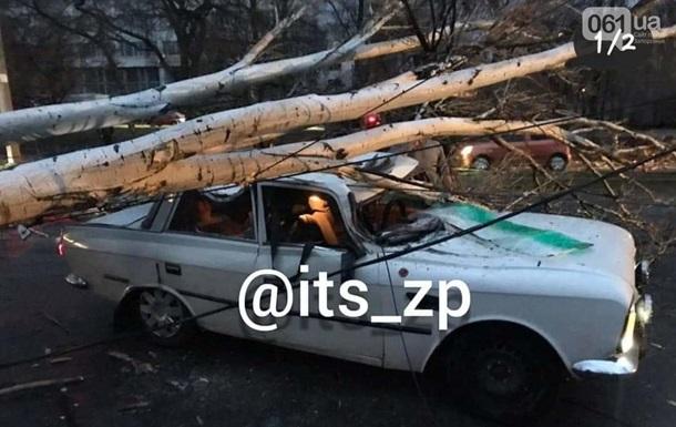 У Запоріжжі дерево впало на авто, постраждав водій