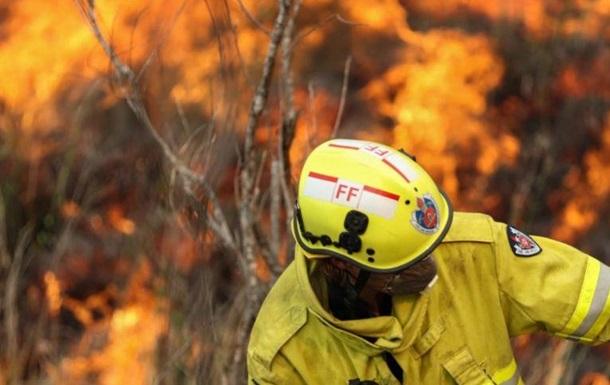 В Австралии из-за пожаров полностью исчез один из видов животных
