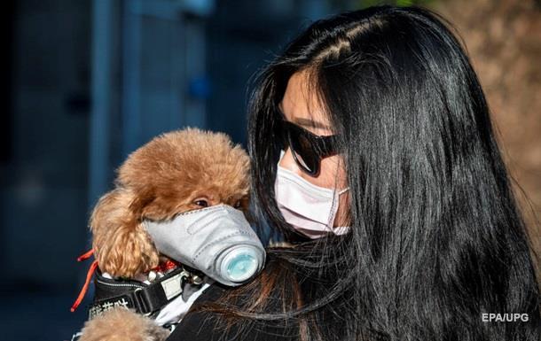 В Гонконге домашнюю собаку отправили на карантин - Korrespondent.net