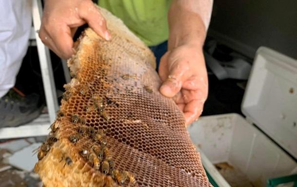 Бджоли зібрали 45 кг меду під стелею квартири