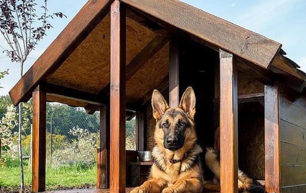Строители собачьих будок