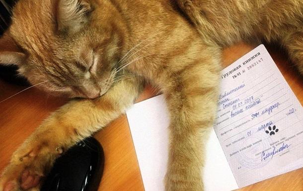 Кота официально трудоустроили в библиотеке: фото