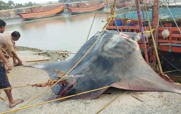 В Індії спіймали рідкісну рибу вагою 900 кг