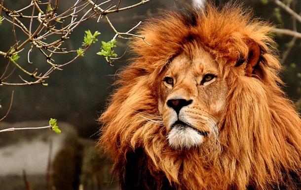 В штате Мехико отрицают появление льва-убийцы