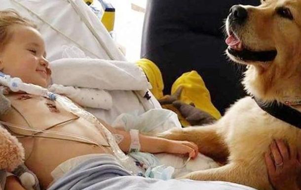 В Англии пес  исцелил  умирающего мальчика