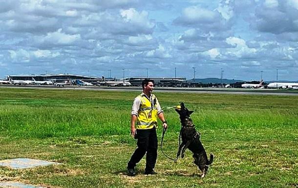 Уволенному из полиции за дружелюбность псу нашли новую работу: фото