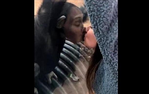 Шимпанзе попытался поцеловать туристку в губы: фото