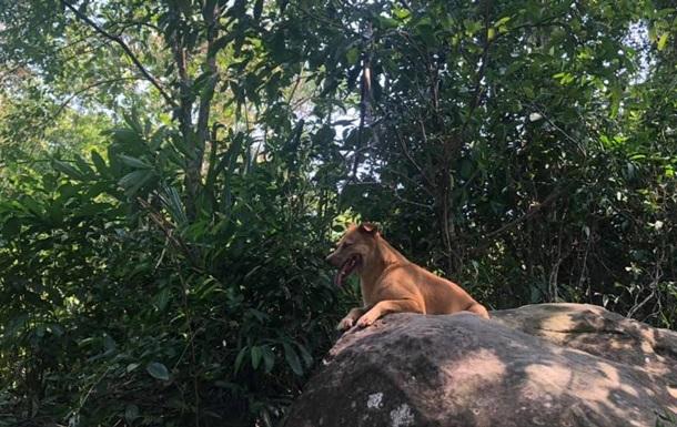 Собака спасла заблудившихся в джунглях туристов