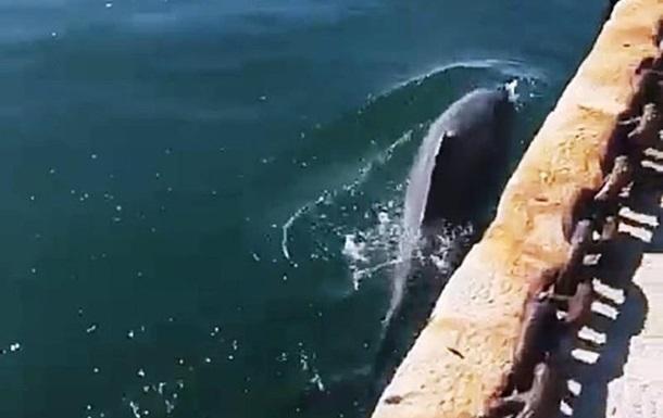 В каналах Венеции появились рыбы и дельфины