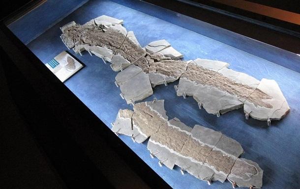 В Канаде нашли скелет древней рыбы с  пальцами