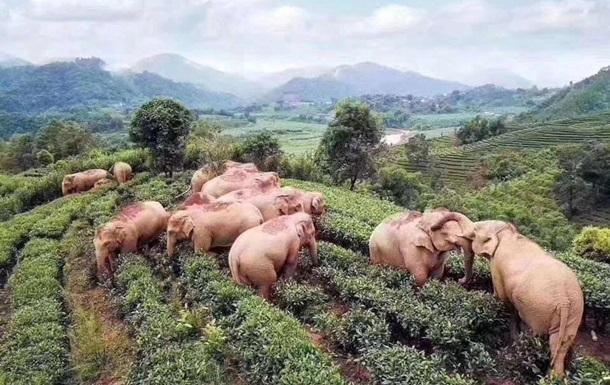 В китайской деревне слоны выпили вино и уснули: фото