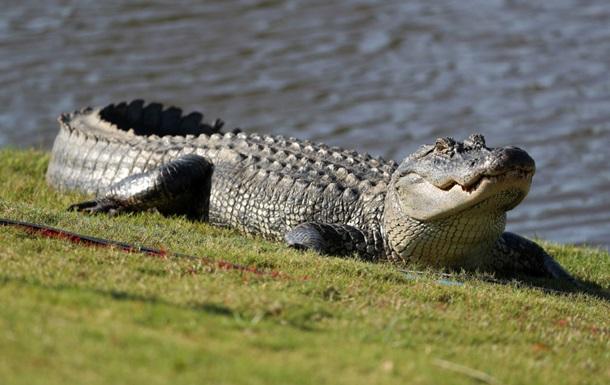 Напад крокодила на жінку зняли на відео