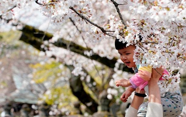 В Японии любуются цветением сакуры - фоторепортаж
