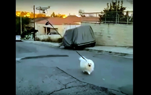 Хозяин на карантине выгулял пса с помощью дрона