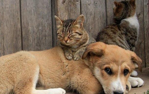 Сегодня ты ведешь любимое животное на убийство – завтра поведешь людей