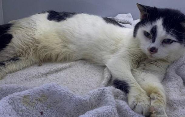 В Бельгии коронавирус обнаружили у кошки