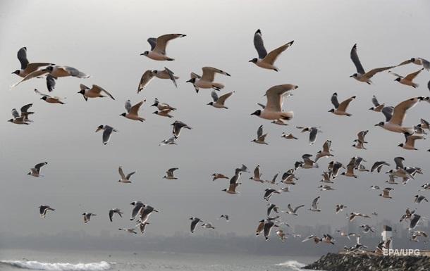 Карантин в столице Перу: на побережье вернулись птицы и морские животные