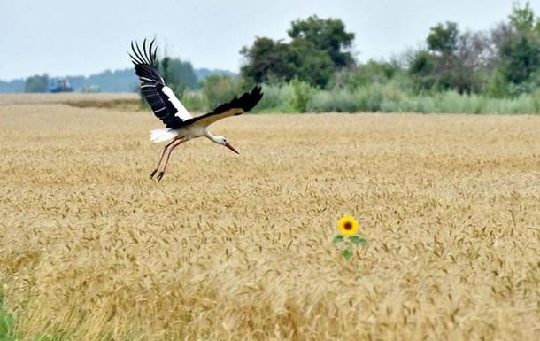 Земельна реформа: як діятиме тепер ринок землі в Україні