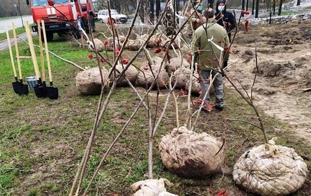 У Києві замість отруєних дерев висадили нові