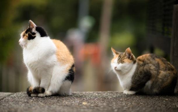 В Ухане выявили коронавирус у 15% кошек