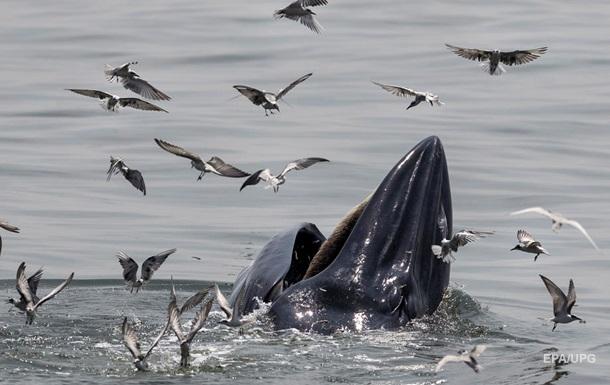 У опустевших берегов Франции появились киты