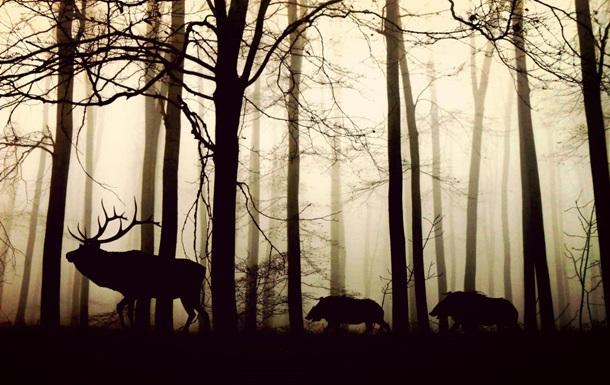 До кінця століття зникнуть 73% живих істот - вчені