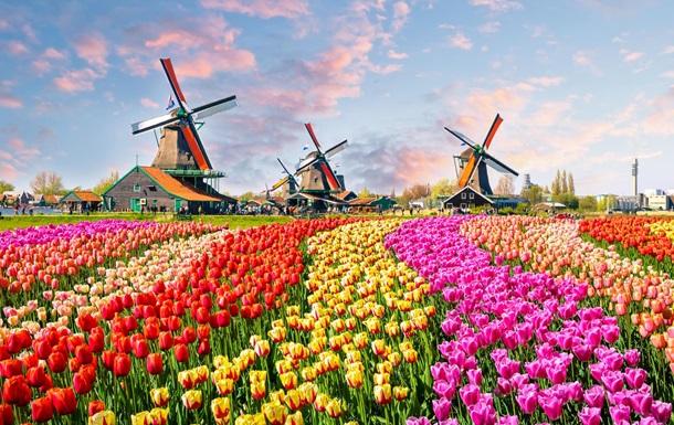 В Нидерландах уничтожили 400 млн цветов из-за коронавируса