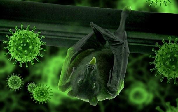 Вчені знайшли зв язок між коронавірусами і кажанами