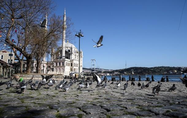 В Босфоре появились дельфины
