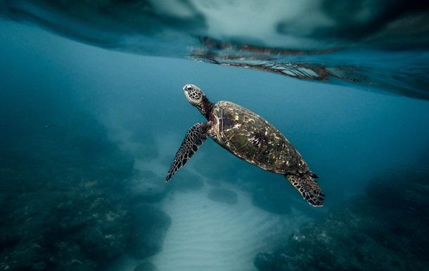 Обнаружен новый вид  ехидно улыбающихся  черепах