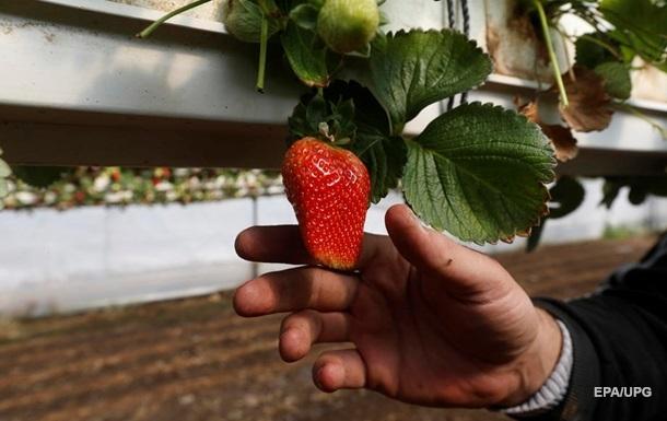 В Україні різко зросла ціна на полуницю