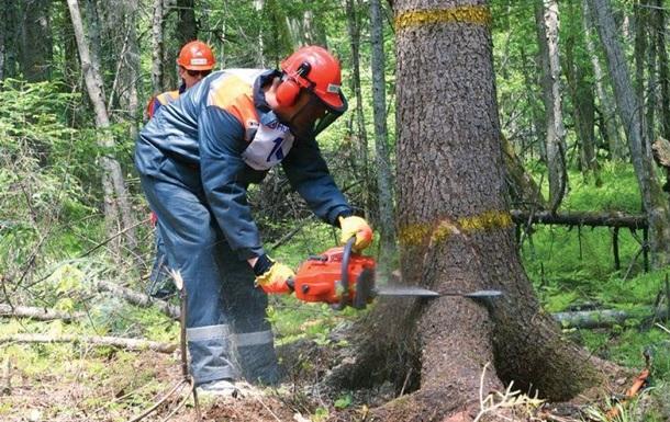 А.Фильчаков: Еще одна масштабная схема незаконной вырубки леса в Харькове