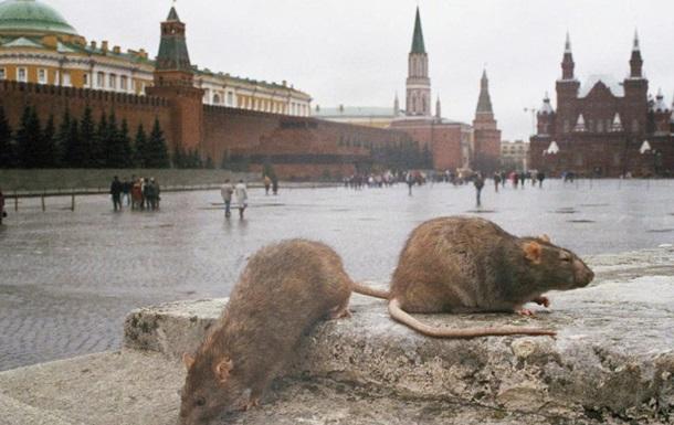 Куда прыгнет крыса? Кое-что о «сценариях Кремля в кризисных условиях»
