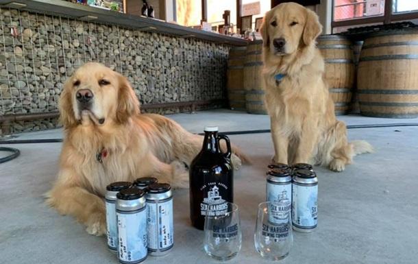 Доставляти пиво в Нью-Йорку взялися ретривери Барлі і Бадді