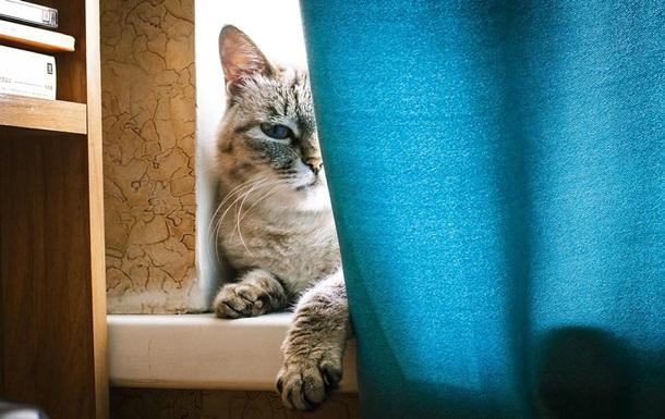 В Испании кот заразился коронавирусом
