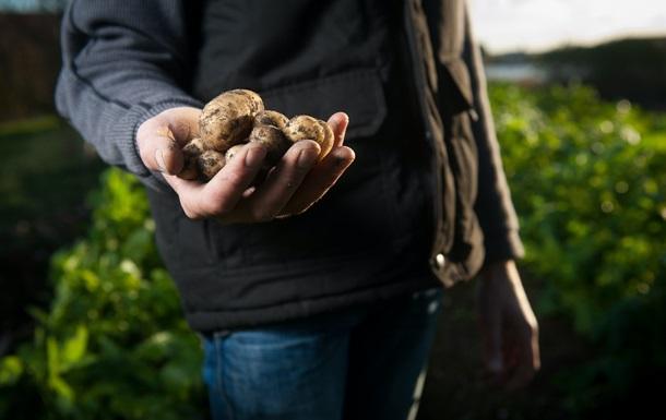 Нидерланды продали украинцам промышленный картофель