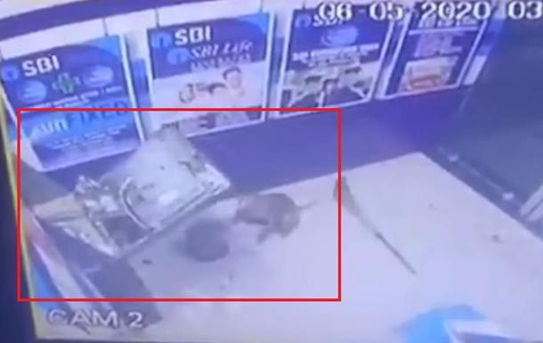 На видео попал взлом банкомата обезьяной