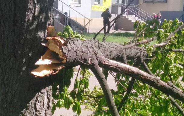В Киеве сильный ветер сломал десятки деревьев