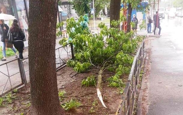 У Києві вітер звалив близько 40 дерев