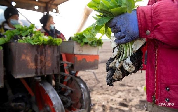 Британии не хватает рабочих рук на фермах