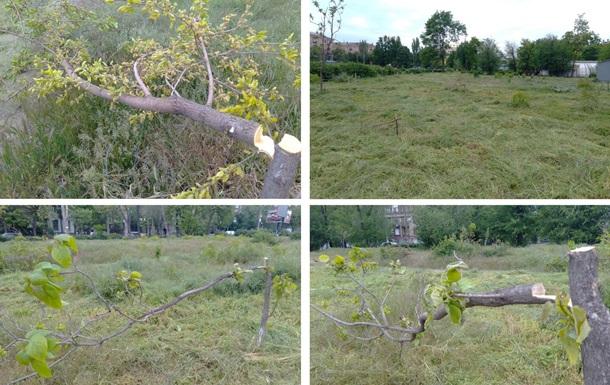 В Запорожье уничтожили молодые деревья в парке