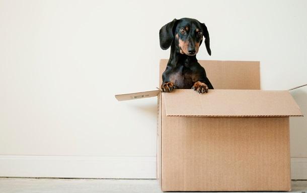 А вы знали, кто поставляет  Новой Почте  коробки?